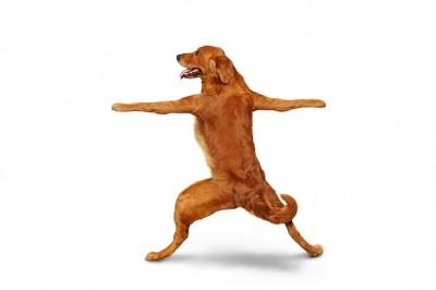 Dog-doing-Simple-Warrior-Pose