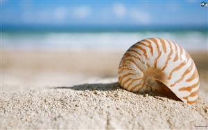 seashells-25a